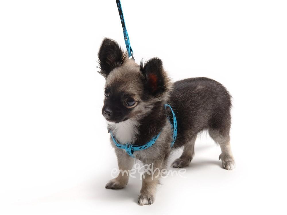Ene Bene postroj pro štěně modrý - tlapka XXS