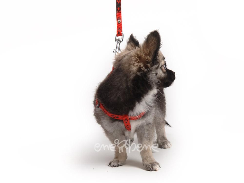 Ene Bene postroj pro štěně červený - tlapka XXS