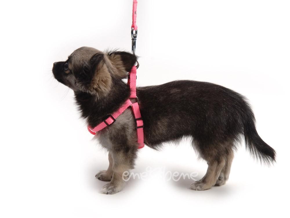 Ene Bene postroj pro štěně neonově růžový XXS