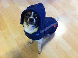 sportovní bunda pro psa