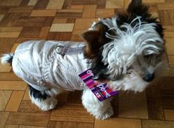 vesta pro štěně