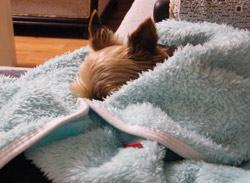 spací pytel pro psa