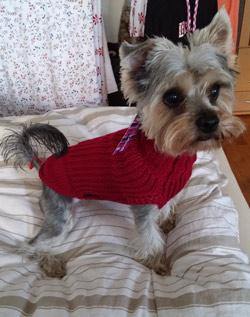 svetr pro štěně