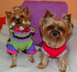 svetry pro psy