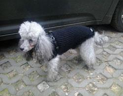 svetr pro psa