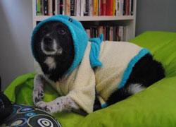 župan pro psa