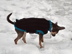 psí svetr