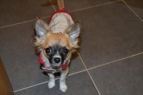 bunda pro štěně