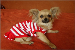 šaty pro psa